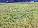 Flattened rice - Japan photo - Gaijin Farmer