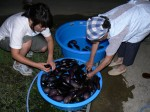 Lots of eggplants - Making miso - Gaijin Farmer