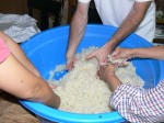 Mixing koji mold into rice - Making miso - Gaijin Farmer